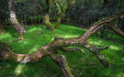 Tree Roots Growing Big And Strong Can Mean Folding And Buckling Concrete Slabs